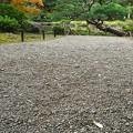 Photos: 謎の生え方。(旧古河庭園)