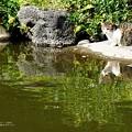 Photos: 捕りたい…。(旧古河庭園)