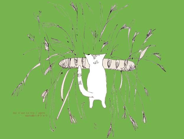 フランスパンを盗んで草をなぎ倒て進む猫。(信州にて)