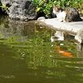 Photos: けど無関心を装う作戦。(旧古河庭園)