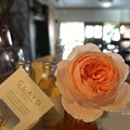 Photos: 我が家の秋薔薇も見頃。(ナエマ)