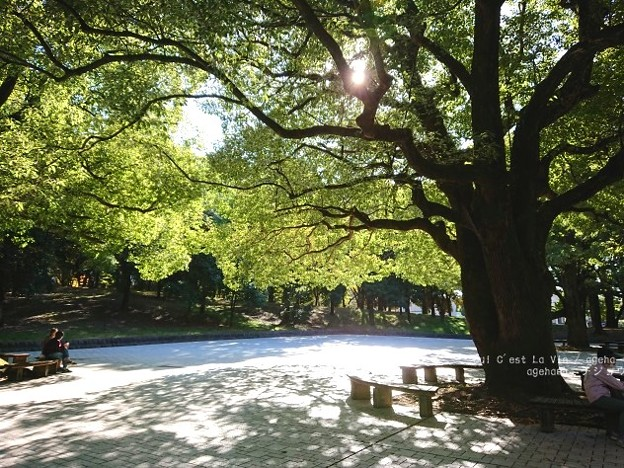 東京都立光が丘公園出口。