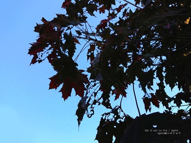 Photos: アート虫喰。(四季の香ローズガーデン)