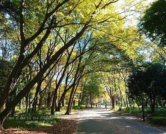 東京都立光が丘公園入り口。