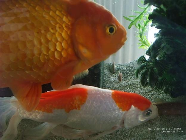 巨大魚にも動じない。