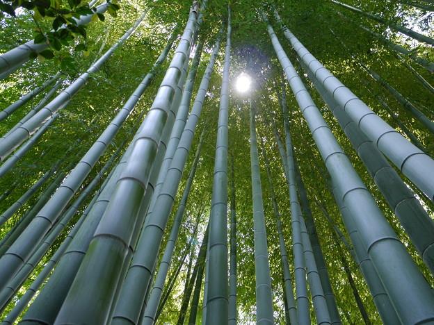 有楽園内の竹林