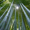 写真: 有楽園内の竹林