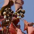 写真: 木の実