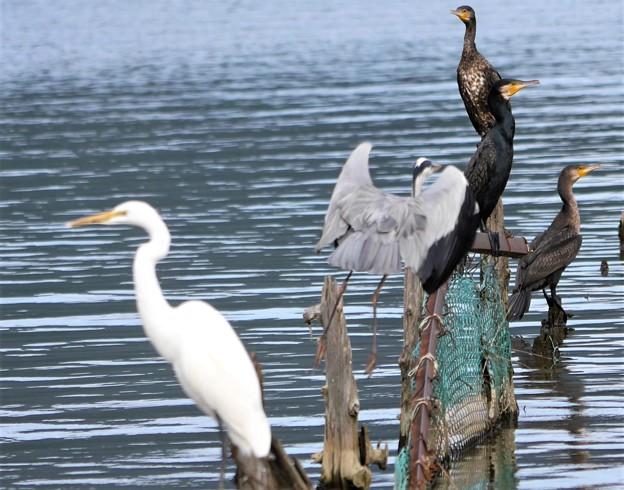 三方湖の鳥
