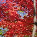 小学校庭の紅葉