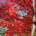 Photos: 小学校庭の紅葉