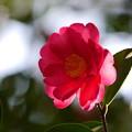 Photos: 今日の花