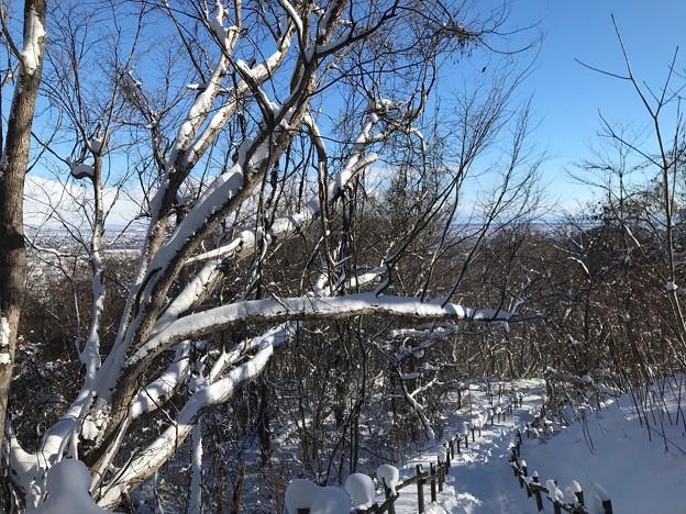 Photos: 三角山IMG_5105