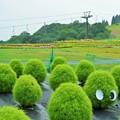 写真: 箱館山ゆり園