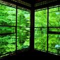 写真: 新緑の瑠璃光院