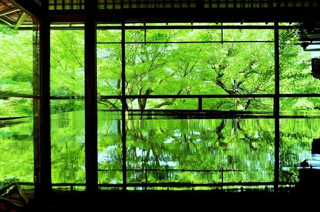 新緑の瑠璃光院