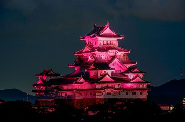 ピンクリボン姫路城