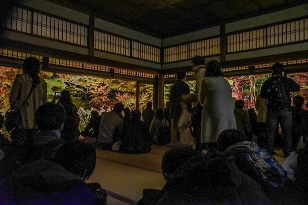 Photos: 天授庵 額縁庭園撮影ちょっと前