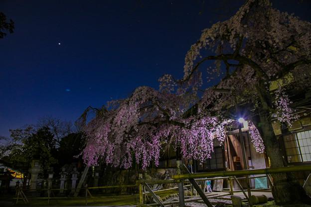 氷室神社 奈良1番桜
