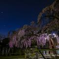 Photos: 氷室神社 奈良1番桜