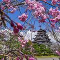 Photos: 桃山城