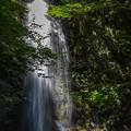 Photos: 白藤の滝