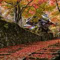 Photos: 湖東三山 百済寺
