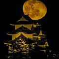 Photos: 伊賀上野城  月城