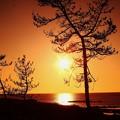夕景 見越しの松 能登上野海岸