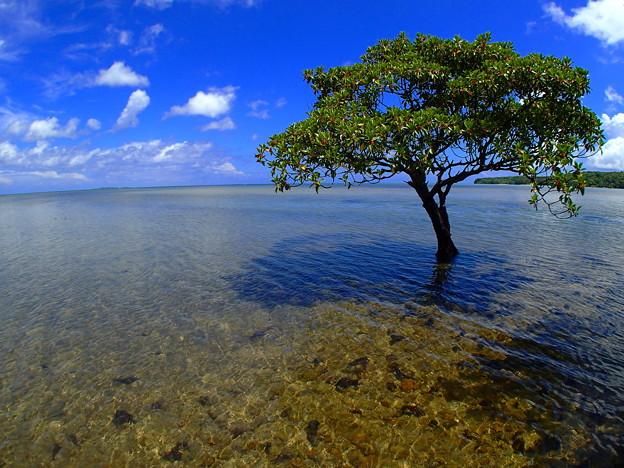水の中に立つ樹なのです^^