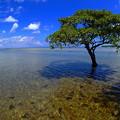 写真: 水の中に立つ樹なのです^^