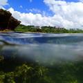 写真: 西表の水中(半分)なのです^^