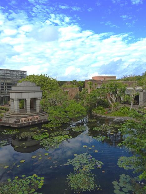 スイレンさんのいる池なのです^^