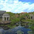Photos: スイレンさんのいる池なのです^^