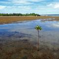 Photos: 湿地は生き物の宝庫なのです^^