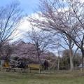 Photos: 多聞山の桜