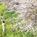 春の川越-4