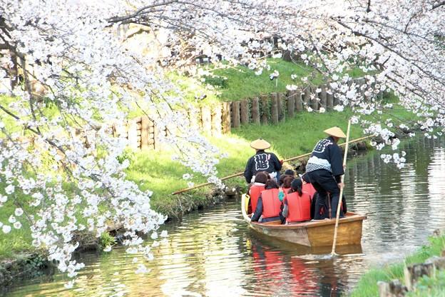 春の川越-10