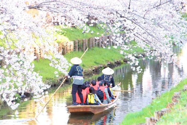 春の川越-13