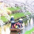 Photos: 春の川越-13
