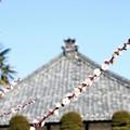 Photos: お寺のある風景