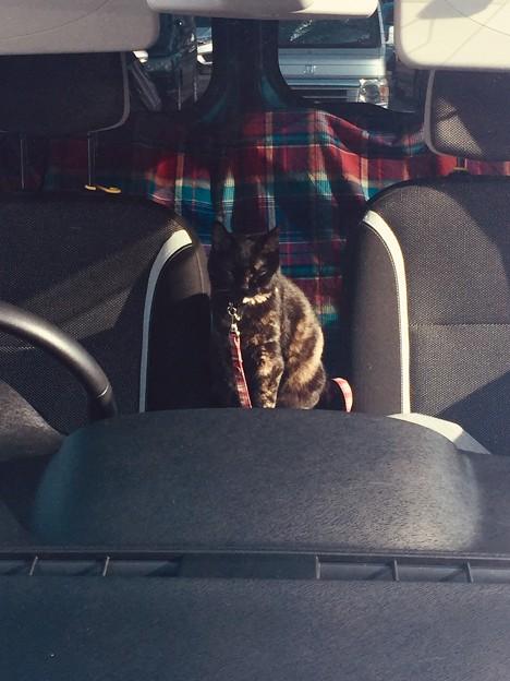 ドライブに行こう!!