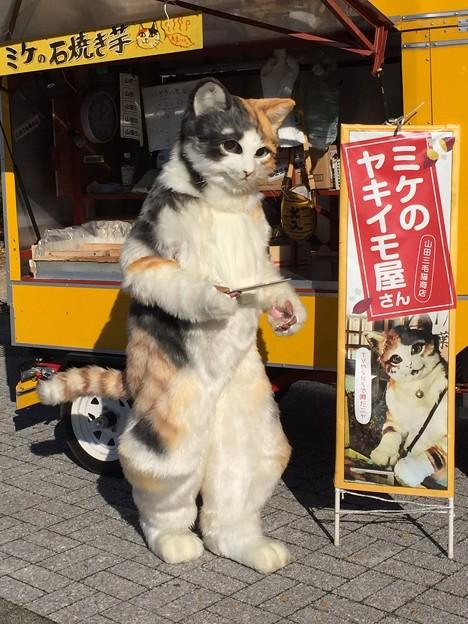 Photos: ミケのヤキイモ
