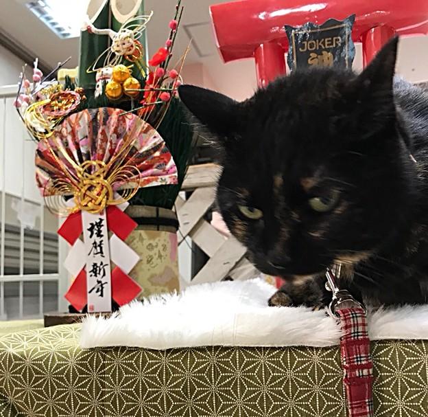 新年のご挨拶 あけおめ(o´ω`)ノ