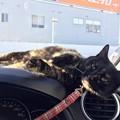 Photos: ぽかぽか!!