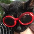 Photos: 夏が キター!!