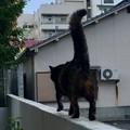 早朝散歩!!