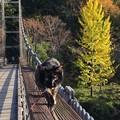 吊り橋を 渡ってみた!!