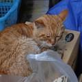 写真: 2011年5月22日のボクちん(7歳)