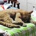 写真: 2009年6月2日のボクチン(5歳)